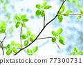Fresh green eco 77300731