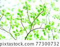 Fresh green eco 77300732
