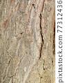 False cypress 77312436