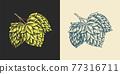 Hops and Barley. Malt Beer. Engraved vintage set. Hand drawn collection. Sketch for web or pub menu 77316711