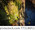Watering system in sun light 77318651