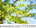 가발의 새잎 77323696