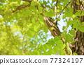 가발의 새잎 77324197