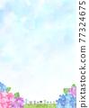 雨季 梅雨 繡球花 77324675