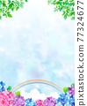 雨季 梅雨 繡球花 77324677