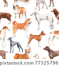 Beautiful seamless pattern with cute watercolor hand drawn dog breeds Cocker spaniel Greyhound Hound Basenji and Russian Greyhound Whippet . Stock illustration. 77325796