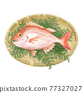 鯛魚 鯛 魚 77327027
