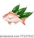 鯛魚 鯛 魚 77327032