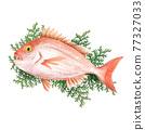 鯛魚 鯛 魚 77327033