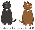 動物 俄羅斯藍貓 淺藍色 77330499