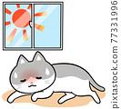 動物 毛孩 貓 77331996