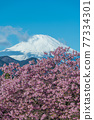 [마츠다 마치 마츠다 산, 꽃 카와 벚꽃과 후지산】 77334301