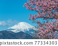 [마츠다 마치 마츠다 산, 꽃 카와 벚꽃과 후지산】 77334303
