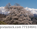Northern Alps and Ichiyaki 77334641