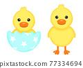 幼鳥 小雞 鳥兒 77334694