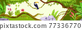 Jungle forest nature background, wood vector exotic landscape, toucan, green leaves, tree, flower 77336770