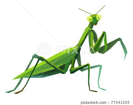 Paper-cutting mantis 77341505