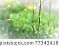 野草 雜草 花朵 77343418