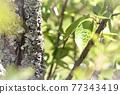 樹木 樹 樹幹 77343419