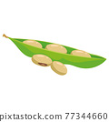 Beans soy ripe pod, healthy organic nutrition product. Vector cartoon flat trendy illustration hand drawn isolated 77344660