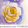 White roses, Artistic sketch etude. Wet painting 77348520
