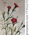 石竹 花朵 花 77352275