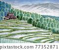 梯田 稻田 水稻 77352871
