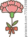 carnation, carnations, mothers day 77352998