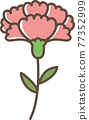 carnation, carnations, mothers day 77352999