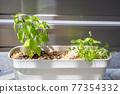 foliage plant, botanic, gardening 77354332
