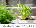 foliage plant, botanic, seeding 77354333