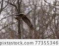 風箏 鳶鳥 鳥兒 77355346
