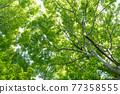 spring, wood, foliage 77358555