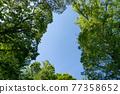 blue sky, wood, tree 77358652