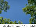 blue sky, wood, tree 77358660