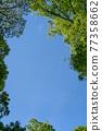 landscape, scape, scene 77358662