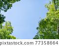 blue sky, foliage, leaf 77358664