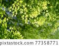 foliage, leaf, leafs 77358771