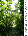 forest, wood, verdure 77358874
