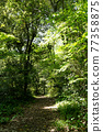 forest, wood, avenues 77358875