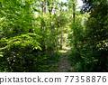 forest, woodland, wood 77358876
