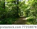 forest, woodland, wood 77358878