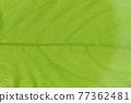 柿子樹 葉子 樹葉 77362481