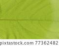 柿子樹 葉子 樹葉 77362482
