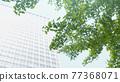leaf, foliage, leafs 77368071