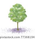 樹木 樹 木頭 77368194