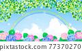 繡球花 矢量 花朵 77370270