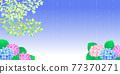 雨季 梅雨 繡球花 77370271