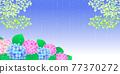 雨季 梅雨 繡球花 77370272