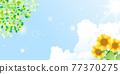 sunflower, sunflowers, summer 77370275